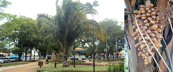 ARTIGO: Palmeira solitária