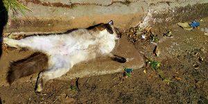 Morte de gatos assusta moradores em Artur Nogueira
