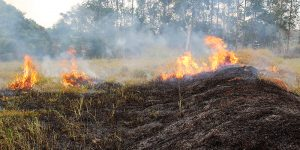 Incêndio destrói 10 mil metros quadrados de área rural em Artur Nogueira