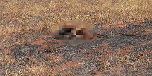 Homem morre queimado em Artur Nogueira