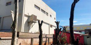 Corte de árvores em Artur Nogueira gera polêmica