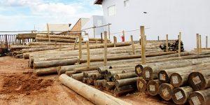 Empresa vende eucalipto tratado a pronta entrega em Artur Nogueira